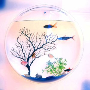 This is an image of a wall hanging fish bowl.