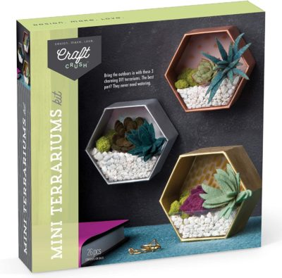 This is an image of a DIY terrarium kit for teenagers.